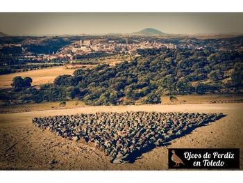 Ojeos de Perdiz en Toledo