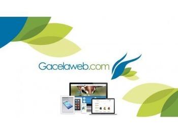 Gacelaweb - Posicionamiento en Buscadores SEO